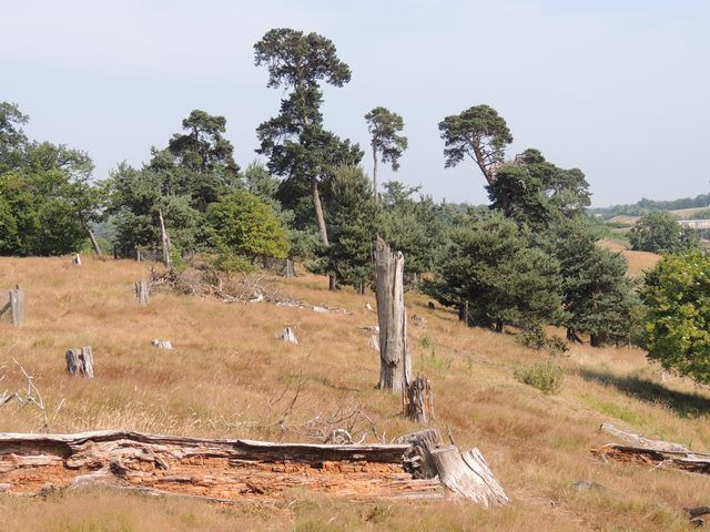 Chilston Pines