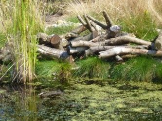 Pond and Log Pile
