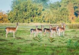 group of deer in open woodland space