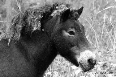 Pony, Sandwich Bay