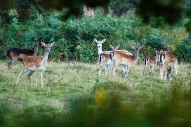 Framed group of deer